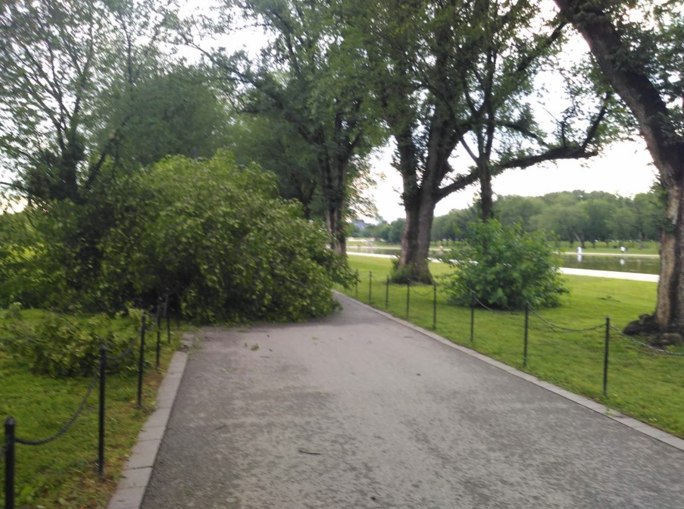 A tree falls near the Lincoln Memorial Reflecting Pool after a storm passed through the D.C. area on Thursday, May 23, 2019. (Courtesy National Park Service)