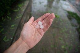 Pea to quarter-sized hail fell in Northwest D.C. on Sunday afternoon near the National Zoo for several minutes, coating roadways and damaging plants. (WTOP/Alejandro Alvarez)