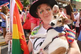 Pets celebrated Pride at the 2019 Capital Pride Parade. (Shannon Finney Photography)