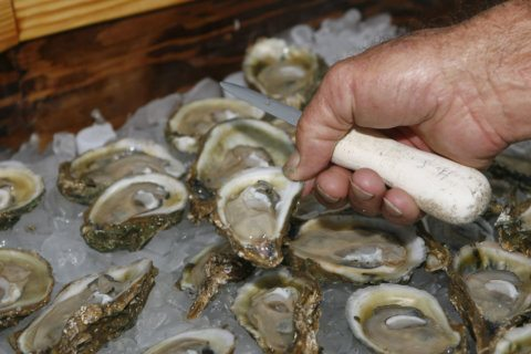 Maryland releases oyster harvest limits: 26% reduction goal