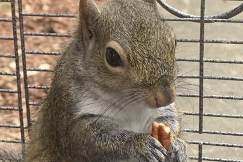 Alabama man denies feeding meth to 'attack squirrel'