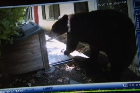 Fort Washington neighborhood on edge after multiple bear sightings