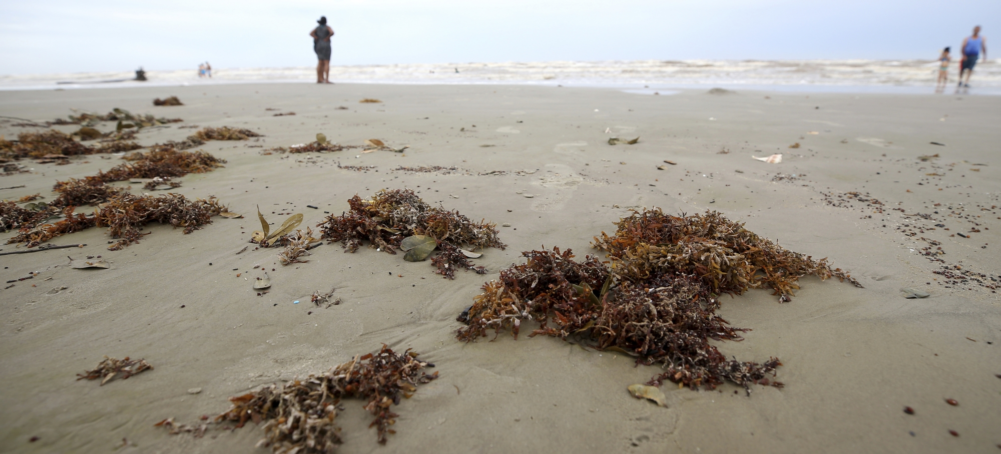 Homeowner groups OK to remove seaweed from Galveston beaches