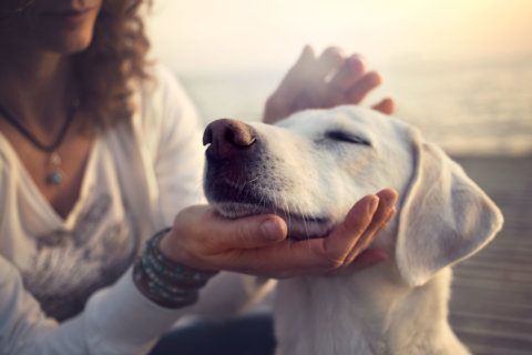 Owning a dog can help your heart, study finds