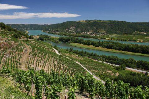 Wine of the Week: Delas is Dee-licious