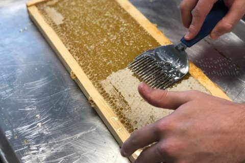 Harvesting honey in Southeast DC