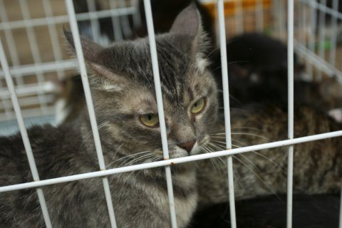 Maryland lawmaker aims to reduce euthanasia in animal shelters