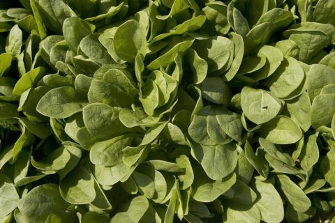 Frozen spinach recalled for possible listeria contamination