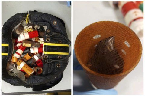 Man caught at JFK smuggling 34 finches in hair curlers
