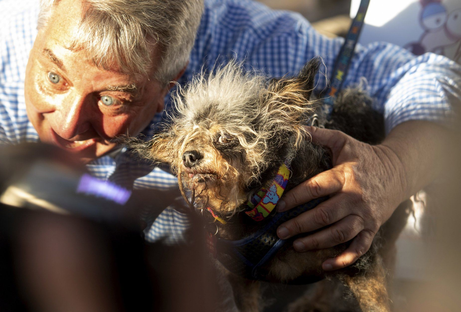 Scamp the Tramp wins World's Ugliest Dog Contest | WTOP