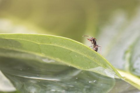 Garden Plot: Outdoor ants are good for the soil