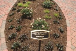 Under the summer sun, they all watched as a garden was dedicated to the five killed in the Capital Gazette newsroom: Rob Hiaasen, Gerald Fischman, John McNamara, Rebecca Smith and Wendi Winters. (WTOP/John Domen)