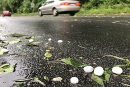A lot of foliage was stripped off of trees by the half dollar sized hail along the C&O Canal hail on Sunday, June 2. (WTOP/Dave Dildine)