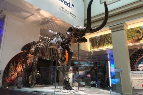 Preview the Smithsonian's reopened dinosaur and fossil hall (photos)