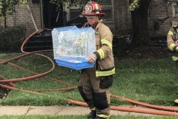 A pet bird was rescued and reunited with its owner. (Courtesy Frederick County Fire and Rescue Services)