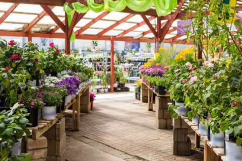 Which DC area garden center chains have the best plant prices?