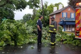 Sunday's thunderstorm knocked down trees on Western Avenue between River and Massachusetts Avenue. (WTOP/Hillary Howard)
