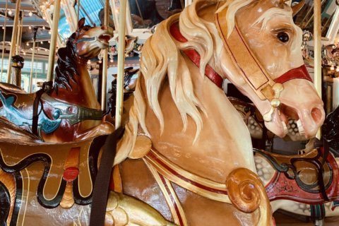 Glen Echo Park's historic carousel to shut down for repairs