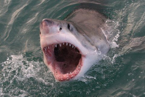Jersey Shore fishermen have 'once in a lifetime' encounter with Great White Shark
