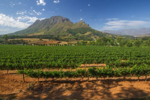 Wine of the Week: Wines of South Africa