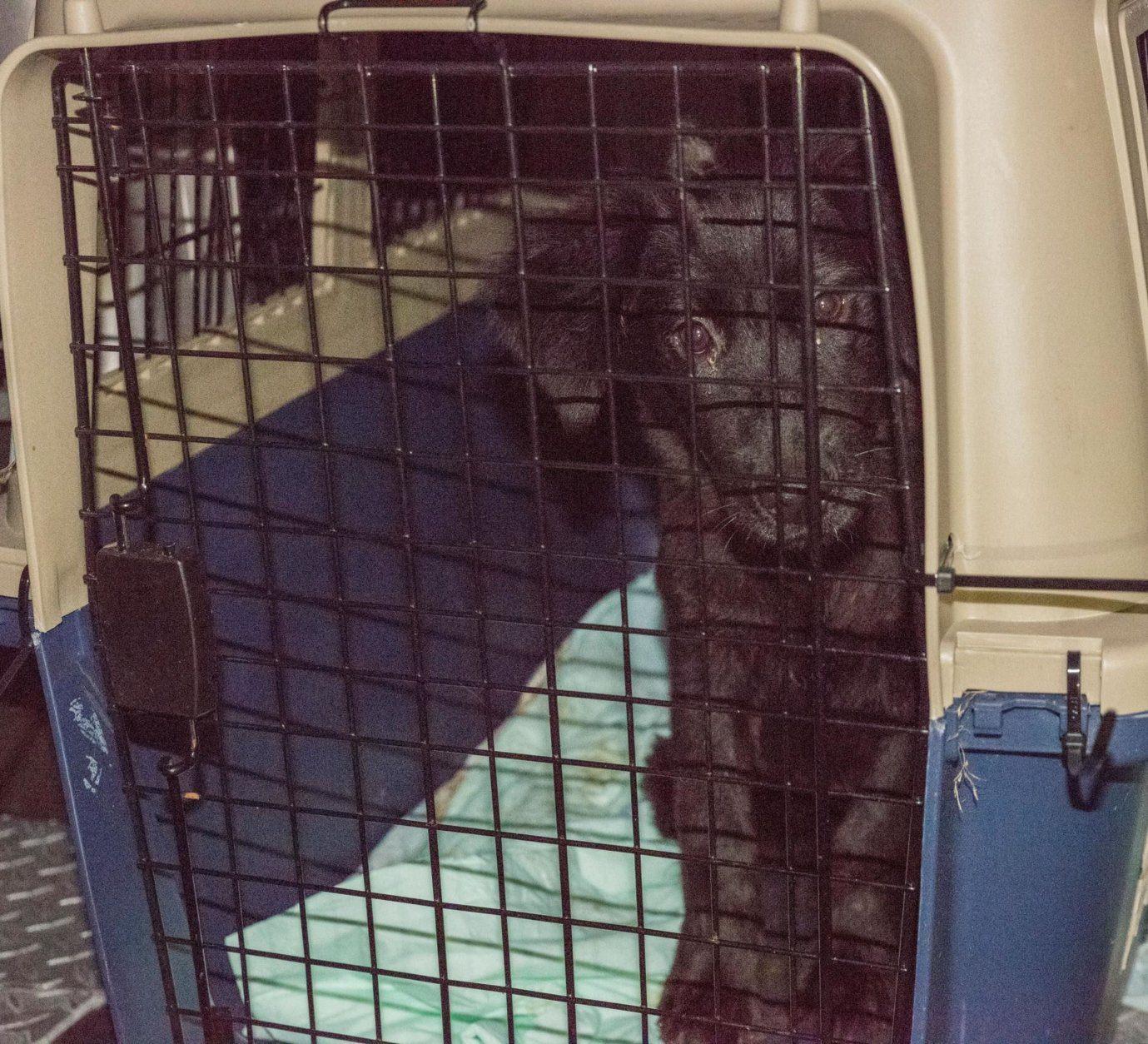 Black dog sitting in kennel.