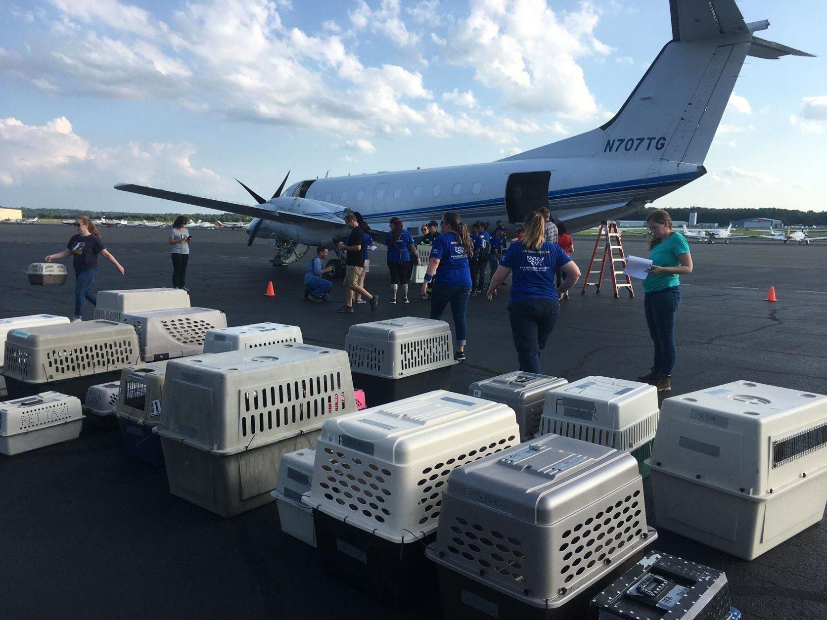 Kennels sit on landing strip at Manassas Regional Airport in Virginia.