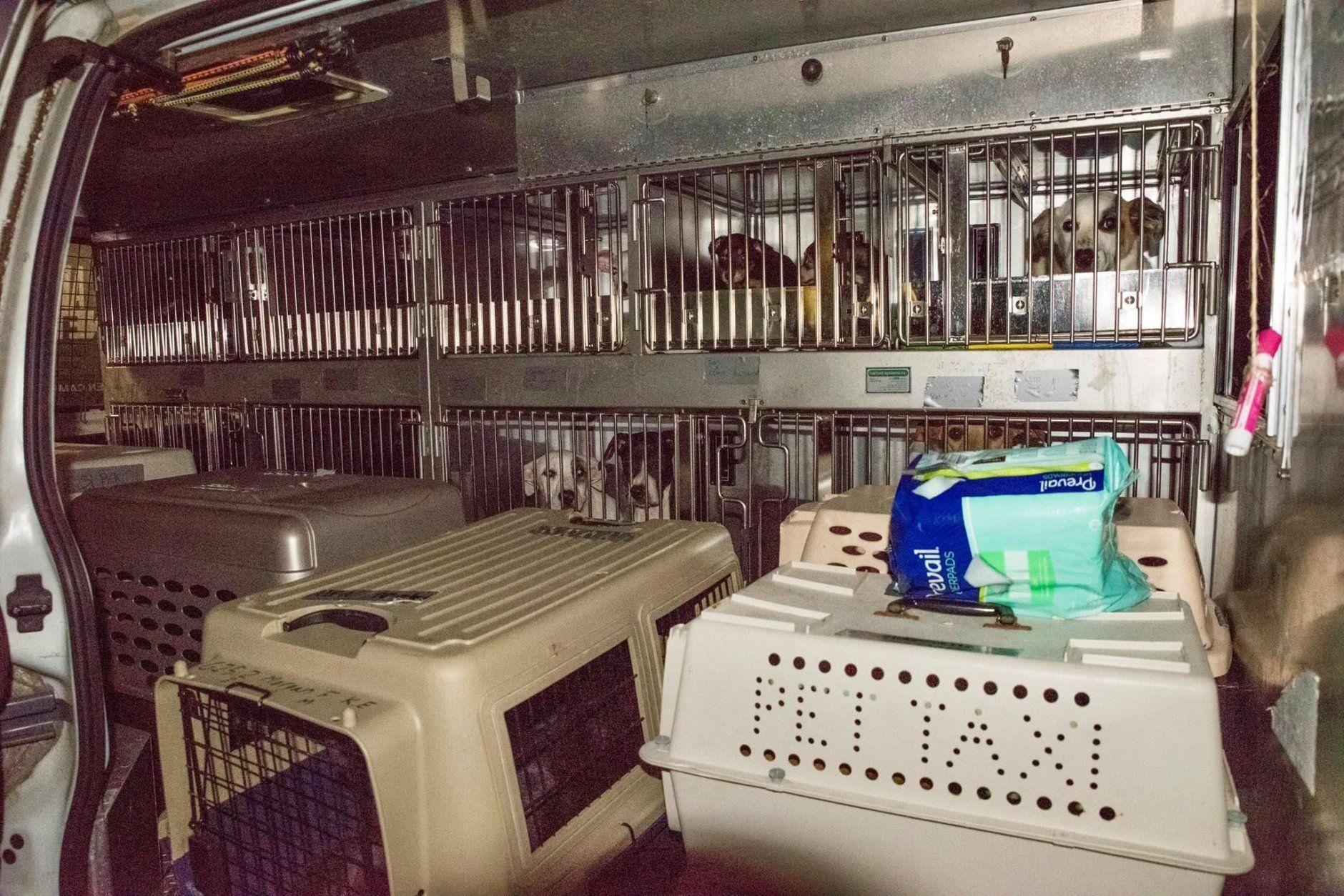 Dogs sit in kennels inside a Humane Rescue Alliance van.