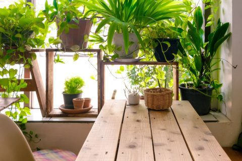 Growing an indoor garden: Tips to 'Make a Plant Love You'