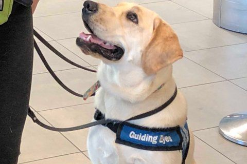 Guide dogs in training cause maximum cuteness alert at BWI Marshall