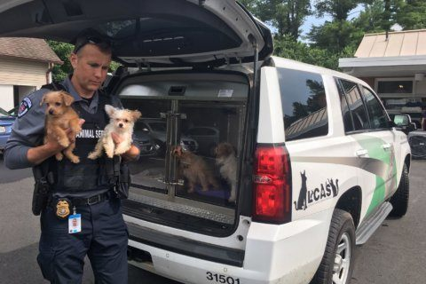 2 arrested, 18 animals seized in Loudoun Co. animal cruelty case