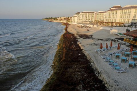 Mexican governor says state could spend $30M on seaweed mess