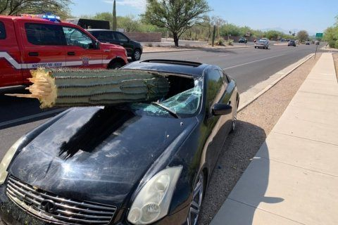 A man got drunk and impaled his car on a giant saguaro cactus