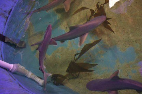 Man convicted of trafficking sharks kept in his basement