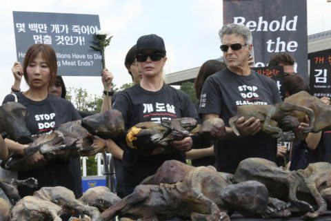 Opposing rallies mark 'dog meat day' in South Korea