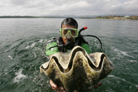 S.Korea actress charged in Thailand for catching giant clams