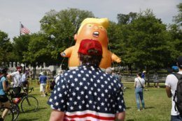 """A man who gave his name only as """"Schwartz,"""" foreground, of Greensboro, N.C., views a Baby Trump balloon as it is moved into position before Independence Day celebrations, Thursday, July 4, 2019, on the National Mall in Washington. (AP Photo/Patrick Semansky)"""