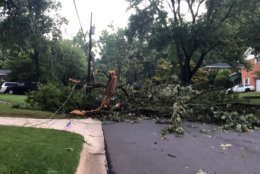 The Stratton Woods neighborhood in Bethesda had multiple downed trees an utility poles.