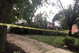 A large tree came down in the Stratton Woods neighborhood in Bethesda late Sunday.