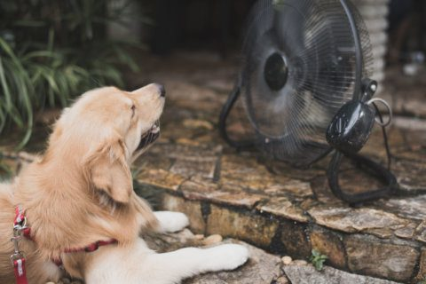 Dog days: Keeping pets safe in hot weather