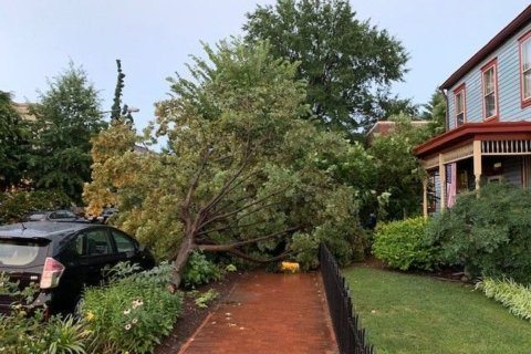 Storms bring down trees, power lines, cause outages in DC area