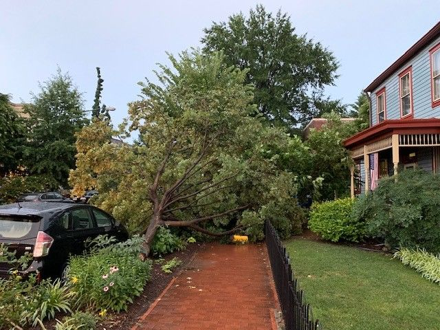 Winds downed a tree on Independence Avenue SE, between 6th and 7th streets. (WTOP/Dan Friedell)