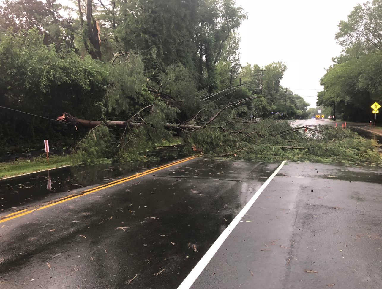 A downed tree closes a road in the City of Fairfax in Virginia, on Tuesday, July 2, 2019. (Courtesy Fairfax City police)