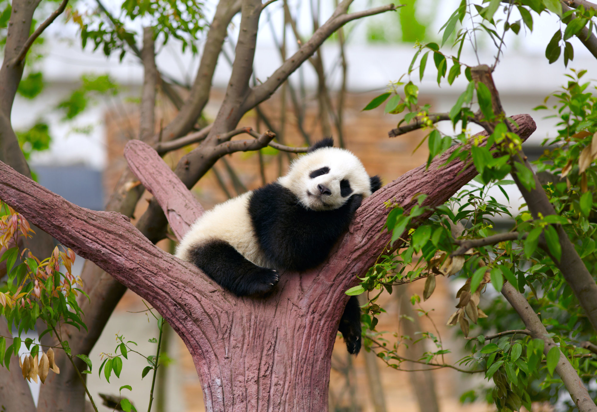 Chunk File Pandas