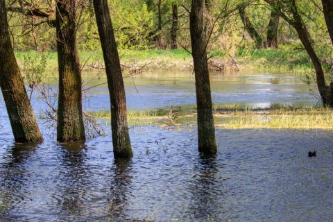 Is standing water threatening your tree? Know the warning signs
