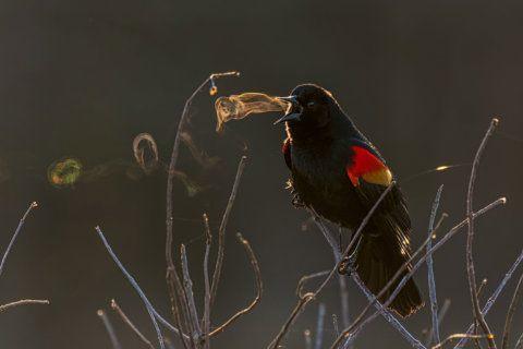 Stunning photo shot in Fairfax Co. park wins 2019 Audubon award