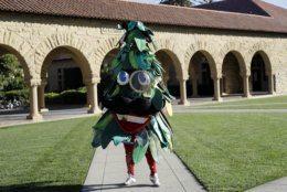 <p>5. The Stanford Tree, Stanford University</p>