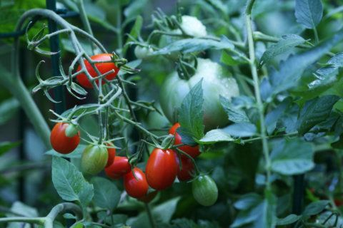 Tips for late-summer, early-fall gardening