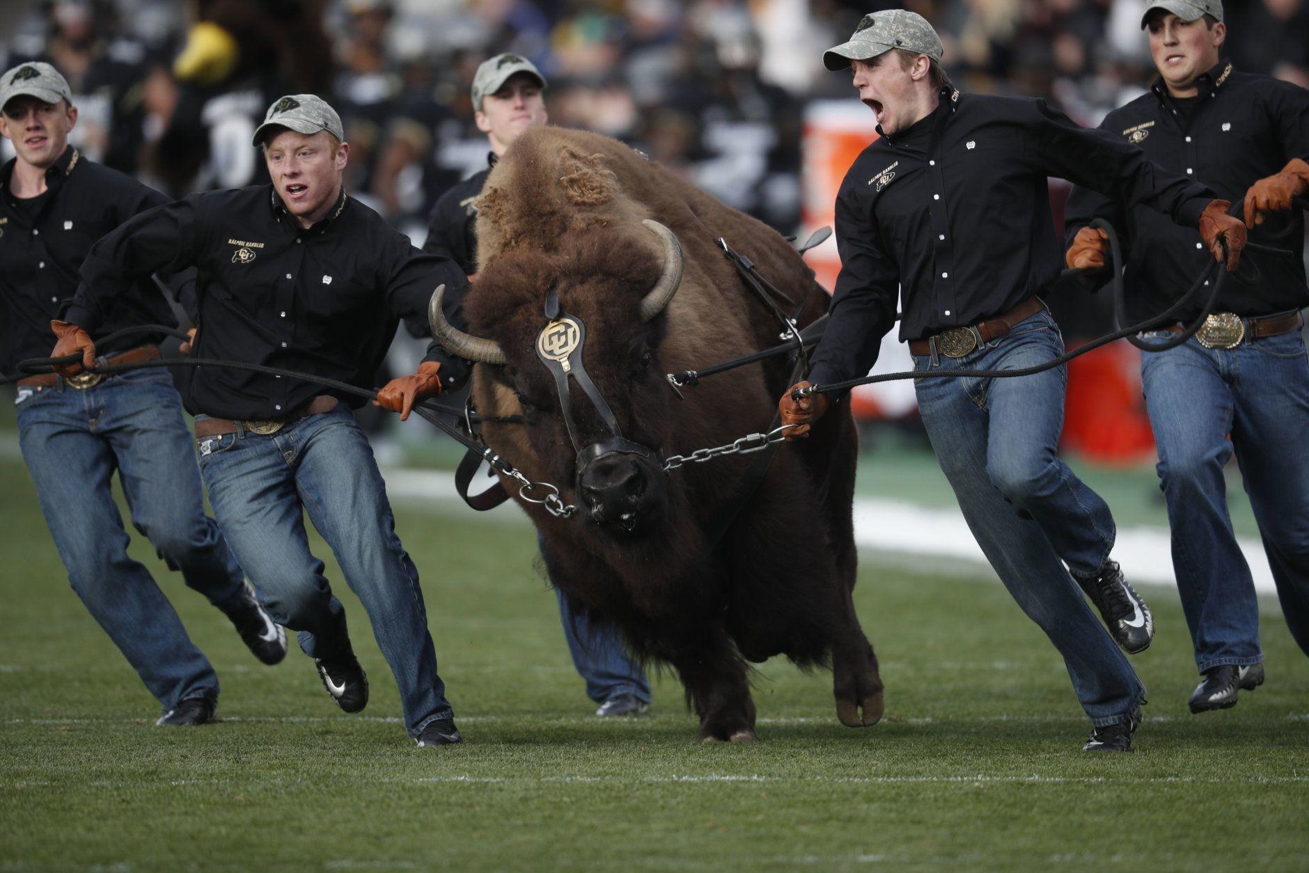 <p>6. Ralphie the buffalo, University of Colorado</p>