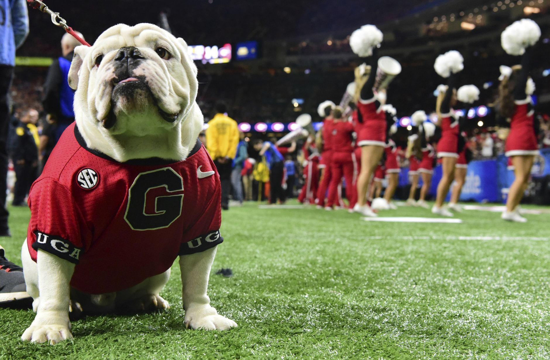 <p>1. Uga the bulldog, University of Georgia</p>