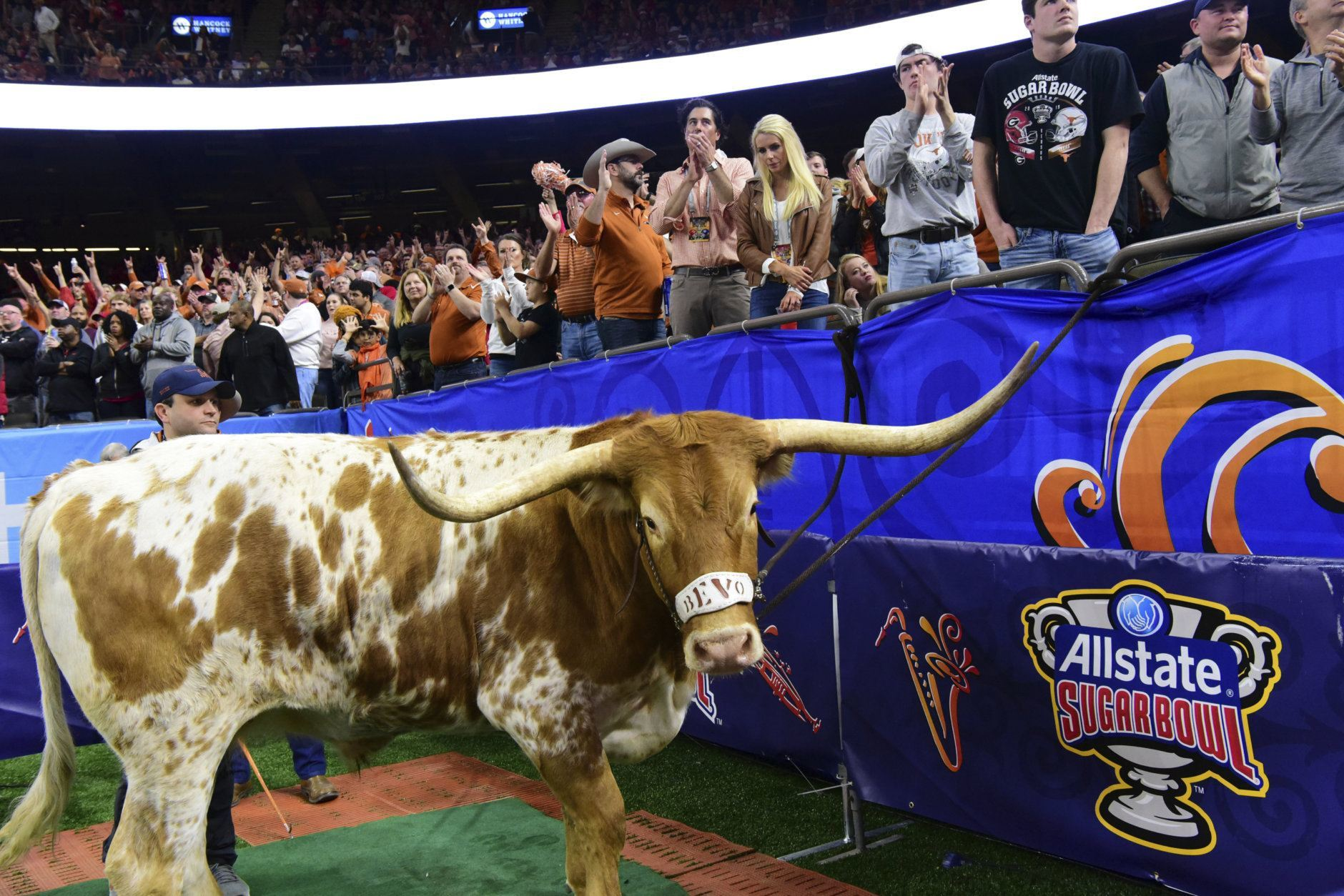 <p>4. Bevo the longhorn, University of Texas</p>